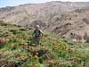 habitat with Fritillaria imperialis (Khorramabad)