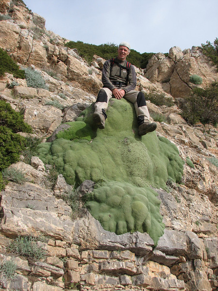 Chair of a whopping big plant of Gypsophila aretioides  (Olang pass, East Elburz, NE Iran)