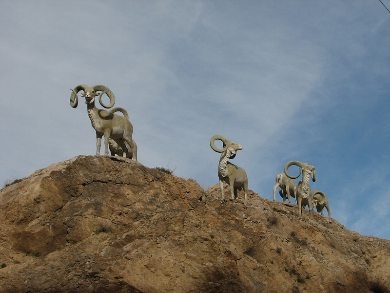 Ibex, rock-goats (Elburz mountains N. Iran  2009)