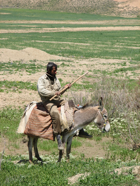 shepard on his donkey (Koppe Dag mountains NE Iran)