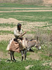 shepard on his donkey (Koppe Dag mountains NE Iran)