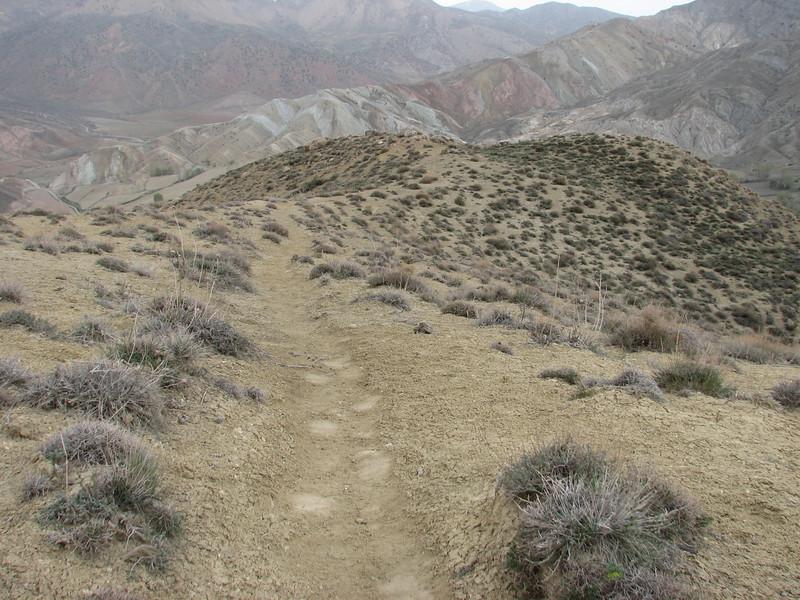 track of the Brown Bear (Tash pa'in, East Elburz, N.Iran)