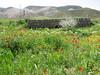 the Elburz (Elburz mountains N. Iran  2009)