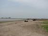 Caspian Sea with many rubbish on the beach (near Behshahr, Elburz, N.Iran)
