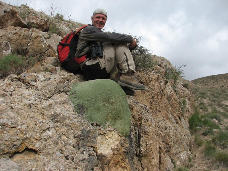 a chair of Gypsophila aretioides ( Koppe Dag mountains NE Iran)
