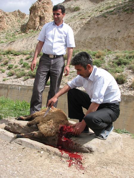 ceremonial slaughter (near Bajgiran, Koppe Dag mountains NE Iran)