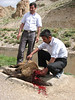 ceremonial slaughter (near Bajgiran, Koppe Dag mountains NE Iran)