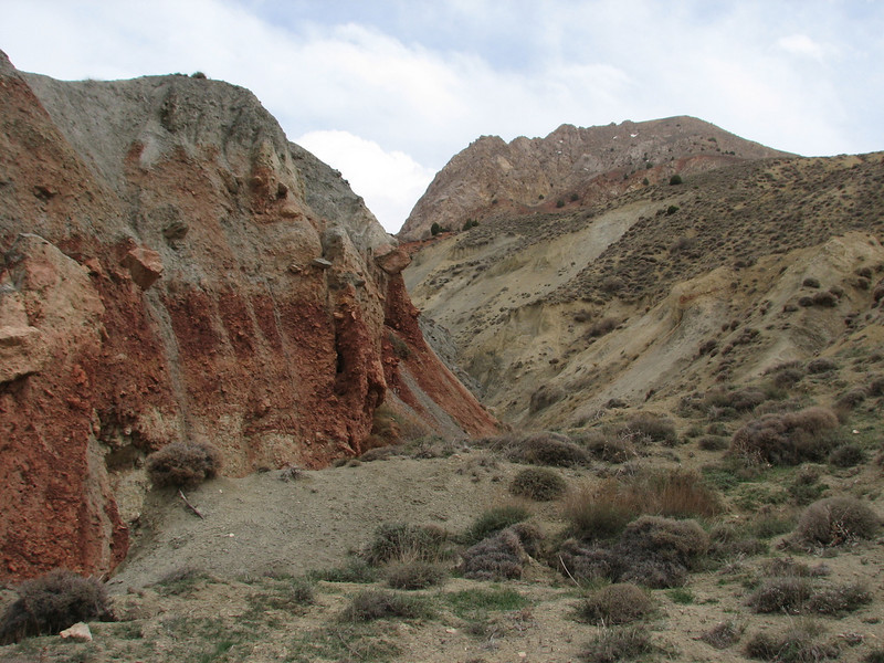 habitat of the Brown Bear (Tash pa'in, East Elburz, N.Iran)