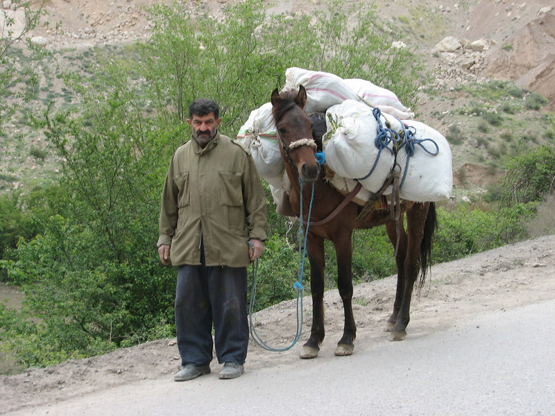 transporting (Elburz mountains N. Iran  2009)