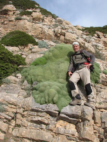 a Gypsophila aretioides cushion of 2mtr. diameter (near the Olang pass, East Elburz, NE Iran)
