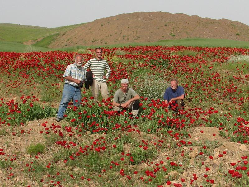 Botanists Harrie, Kees Jan, Marijn and Sicco in a poppie field (Iran, Azarbayjan-e-Gharbi, 22km SE of Shahin Dezh (30)