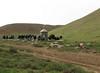 memorial service on a cemetry (Iran, Zanjan, 3km NE of Sontu (35)