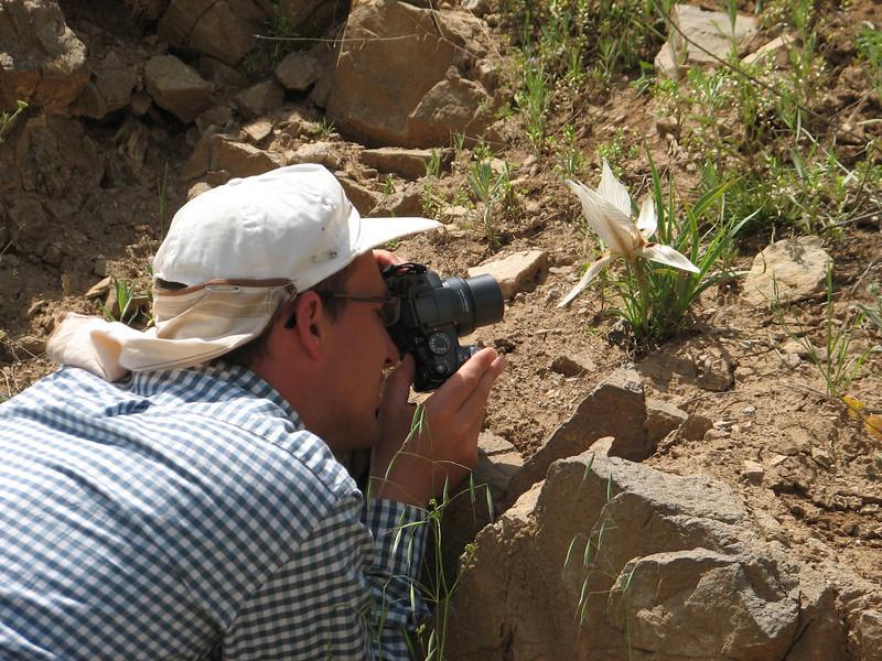 Iris actuloba ssp. lineolata (Iran, Zanjan, Sendan mountains, pass 2200m near Khanchay, 30km NE of Bonab (38)