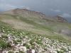 view after a hailstorm (Iran, Azarbayjan-e-Gharbi, pass 2600m NE of Qaravo (33)