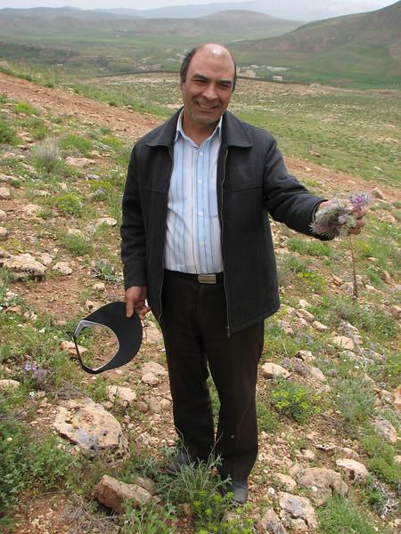collecting plants of Stachys lavandulifolia for making tea (Iran, Azarbayjan-e-Gharbi, Takht-e-Soleyman 2235m (32)