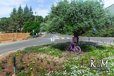 2017-05-19 * (1) Malkiya Kibbutz (12 of 67)