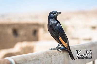 2017-05-22 (1) Masada, Ein Gedi, Dead Sea (29 of 69)