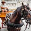 Coachman Horse