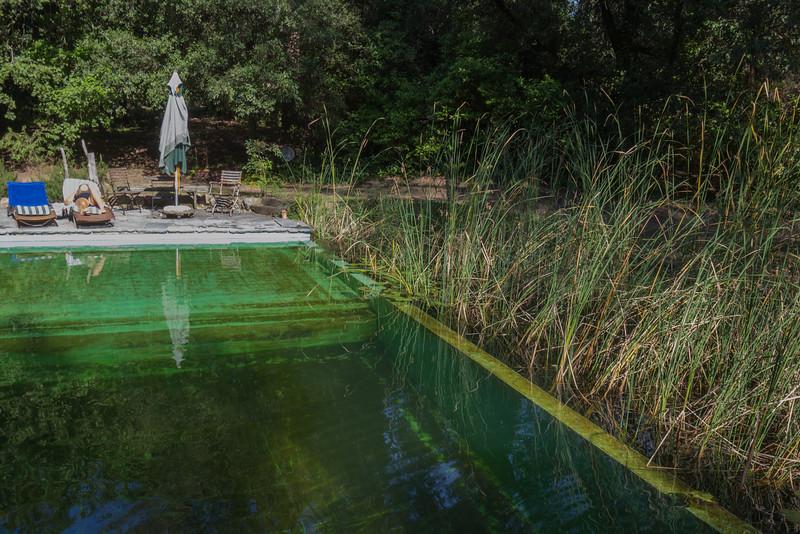 Naturally purified swimming pool