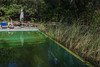 Naturally purified swimming pool