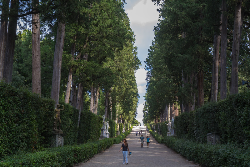 avenue of cypresses