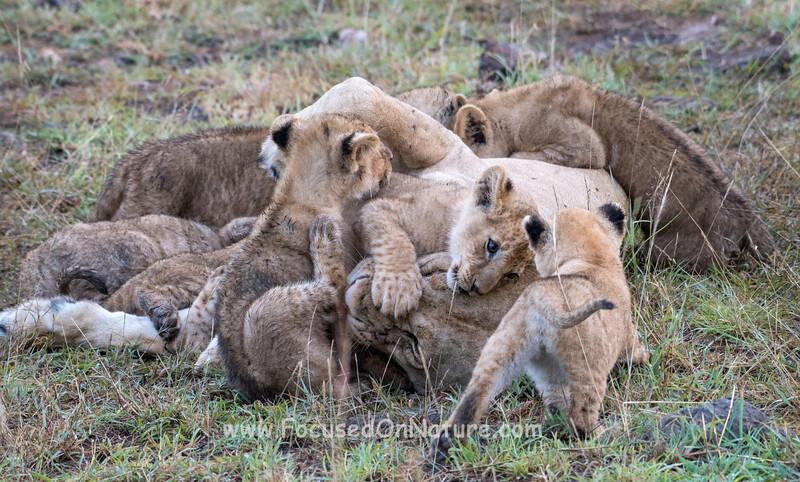 Mass Of Cubs