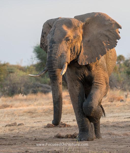 Elephant Balancing Act