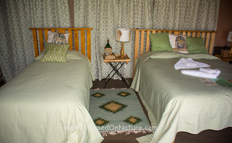 Our Porini Lion Room