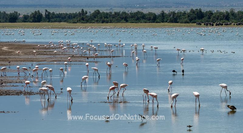 Amboseli Waterbirds