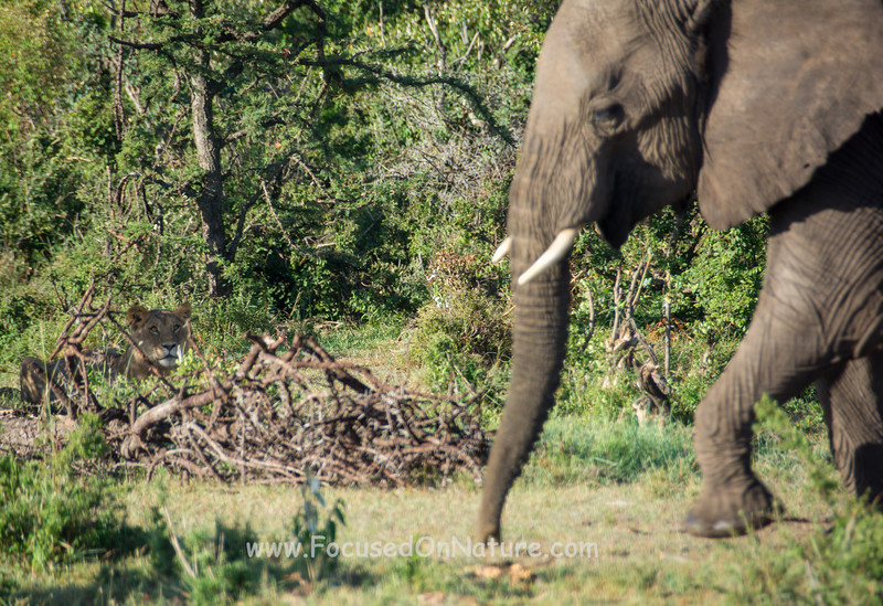 Stalking Elephants