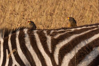 Day 6 -- Maasai Mara