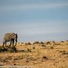 Maasai Mara National Reserve, Kenya