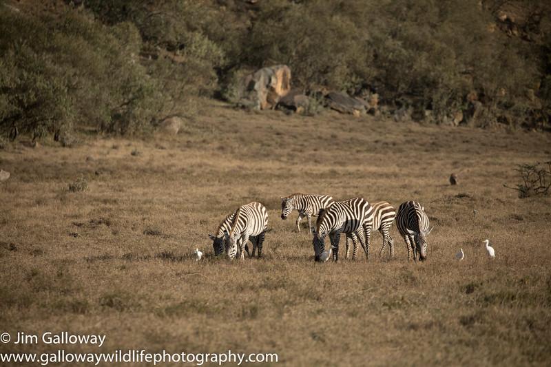 Hell's Gate National Park , Kenya