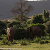 Samburu National Reserve , Kenya
