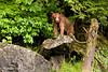 Cub on a rock.