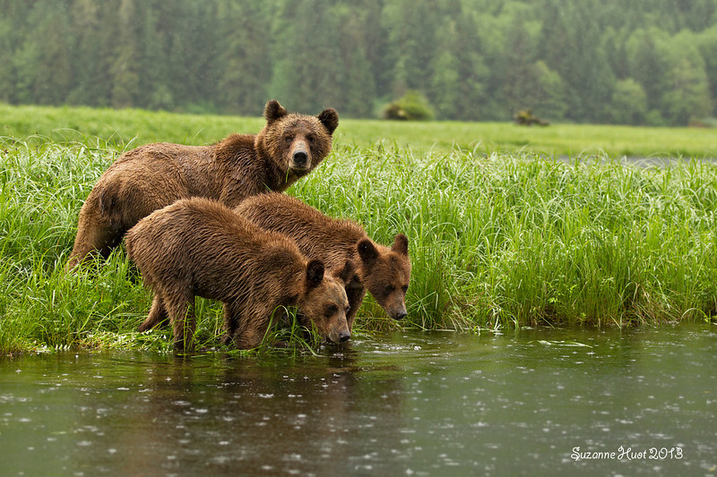 A very wet day for the Bears and us.