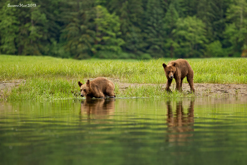Cub reflections.