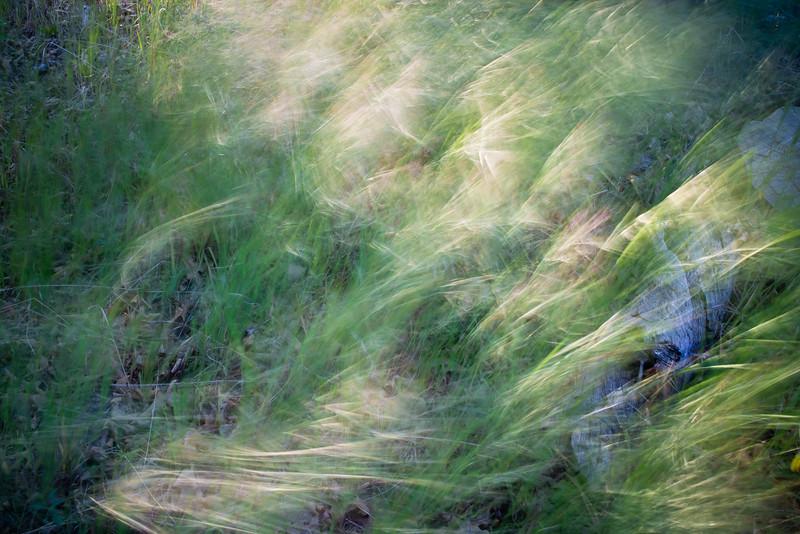 Blustery Grass