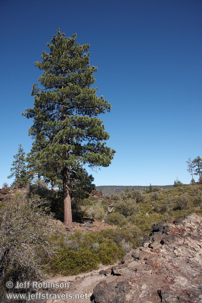 Tall tree past the red in the lava at the end of Beaut Cone at marker 9 (9/8/2009, Spatter Cones Nature Trail, Lassen NF)
