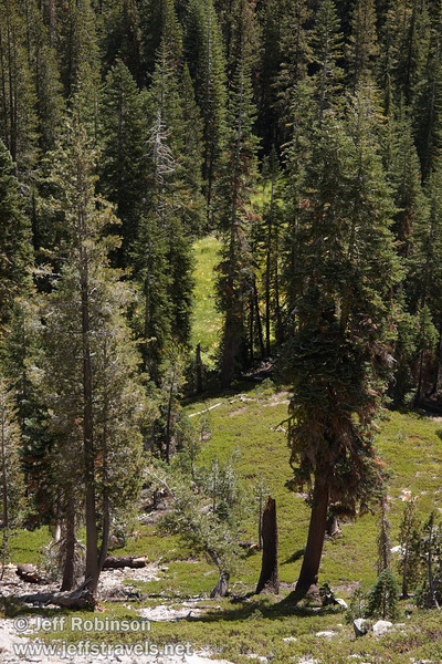 Green meadows through the forest. Seen from near the Cascade view point (9/10/2009, Kings Creek Falls hike, Lassen NP)