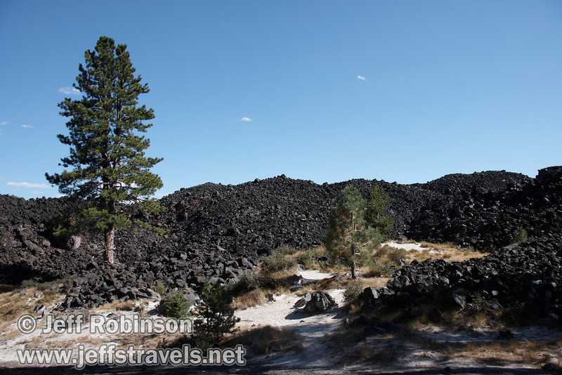 Pine trees growing at the edge of the Fantastic Lava Beds (9/11/2009, Cinder Cone hike, Lassen NP)