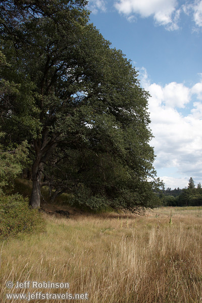 Grass, oak tree, blue sky, and white clouds by the Crystal Lake trail (9/12/2009, Crystal and Baum Lakes, Cassel, CA)