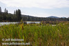 Crystal Lake with reeds and cattails in the foreground, and forest behind (9/12/2009, Crystal and Baum Lakes, Cassel, CA)