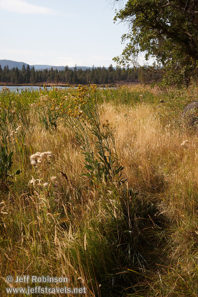Trail though grass next to Crystal Lake with its reeds, cattails, and flowers (9/12/2009, Crystal and Baum Lakes, Cassel, CA)