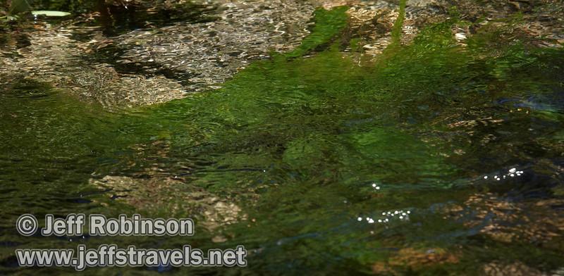 Brilliant green algae in Kings Creek. Seen just below the bridge for the Bench Lake trail a little above the falls. (9/10/2009, Kings Creek Falls hike, Lassen NP)
