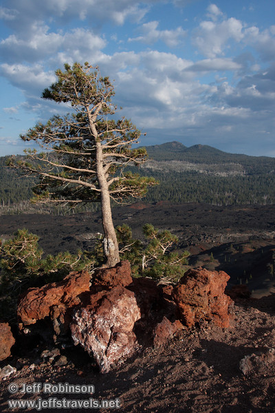 Red rocks and wind blown trees on the top of Cinder Cone by the top of the southern trail entrance, with the Fantastic Lava Beds and mountains in the background (9/11/2009, Cinder Cone hike, Lassen NP)