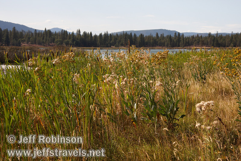 Crystal Lake with reeds, cattails, and flowers in the foreground, and forest behind (9/12/2009, Crystal and Baum Lakes, Cassel, CA)