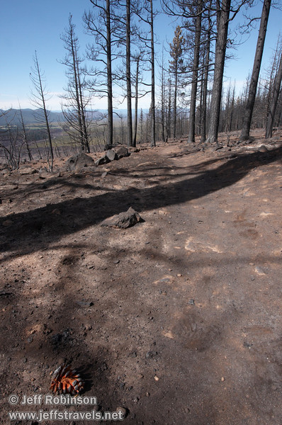 Reddish pine cone in foreground with burned trail and trees in the background (9/6/2009, Hat Creek Rim hike, Pacific Crest Trail near 44/89 junction)