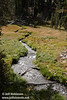 Kings Creek meandering through a green meadow, fairly close to the trail head. (9/10/2009, Kings Creek Falls hike, Lassen NP)