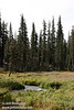 A little bit of Kings Creek in a green meadow with forest behind it, fairly close to the trail head. (9/10/2009, Kings Creek Falls hike, Lassen NP)